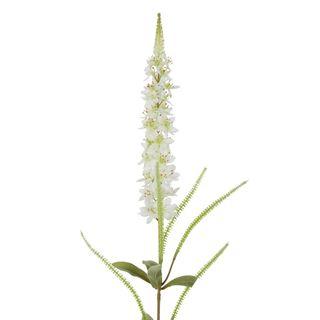 Veronica Speedwell Flower Stem White