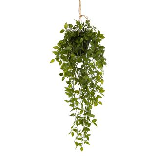 Hanging Leaves with Black Pot