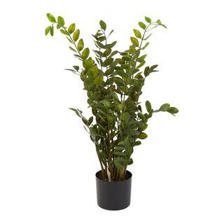 Money Tree Plant in Black Pot