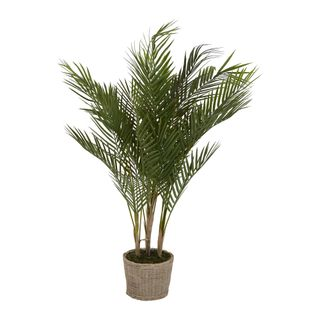 Small Palm in Cement Pot