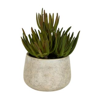 Succulents in Grey Pot Large