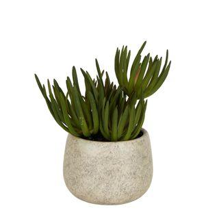 Succulents in Grey Pot Small