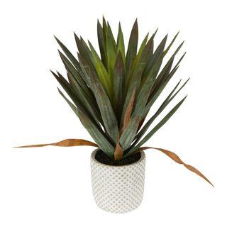 Yucca Gloriosa In Cement Pot