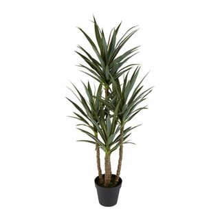 Yucca 5 Branch in Black Pot