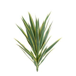 Yucca Head Green 78cm