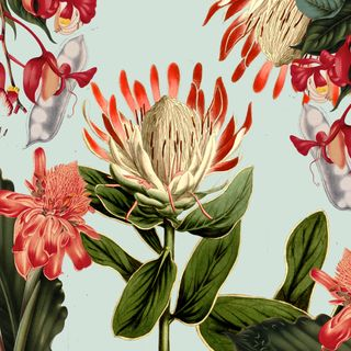 PROTEA AND CO