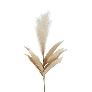 Feather Pampas Stem Coffee