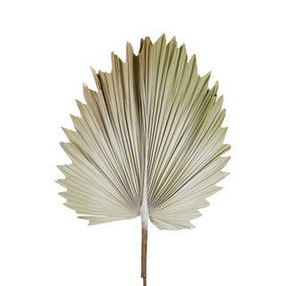 Preserved Palm Leaf Cream Small