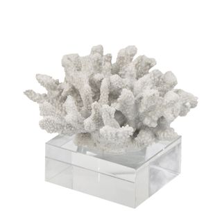 Hawaii Coral with Glass Base White