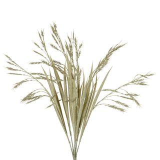 Wheat Bush Stem Sage