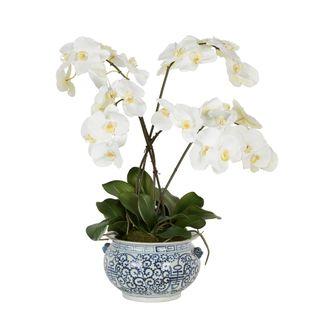 Mahiya Orchid Arrangement White