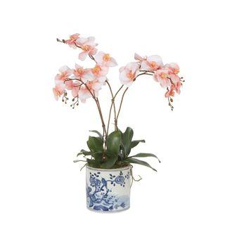 Cheng Orchid Arrangement Coral