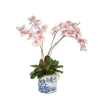 Cheng Orchid Arrangement Pink