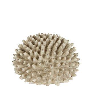Rustic Urchin Flower
