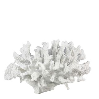 Reef Coral White