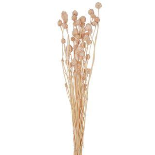 Pompom Flowers Preserved Bunch Soft pink