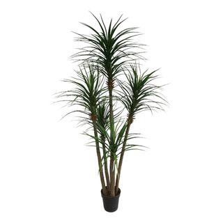 Yucca Tree In Black Pot 180cm