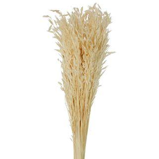 Wheat Preserved Bunch Cream