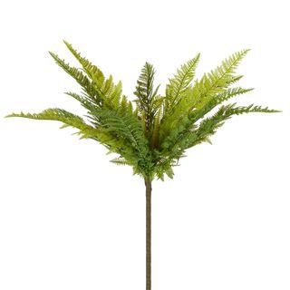 Native Fern Green