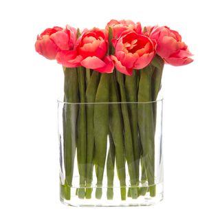 Tulip in Water in Vase Salmon