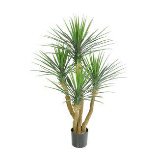Yucca Rostrata Tree x 4 w/235 Lvs 90cm