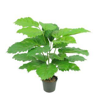 Mini Chestnut Leaf Potted Plant