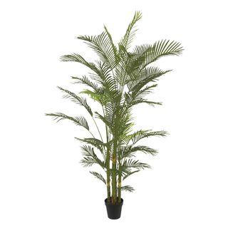 Real Touch Palm Tree In Black Pot 210cm