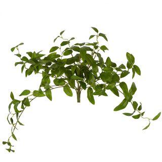 Olive Leaf Hanging Bush Green