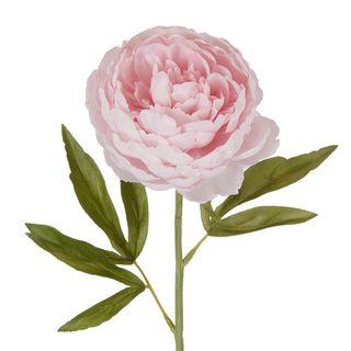 Peony Single Stem Light Pink