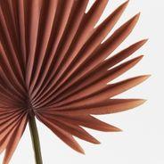 Palm Fan 66cml