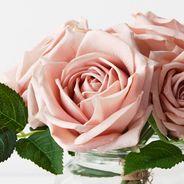 Rose Clara Mix in Vase 11cmd X 10.5cmh