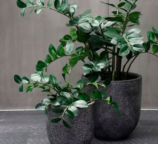Floral Interiors Products Artificial Plants