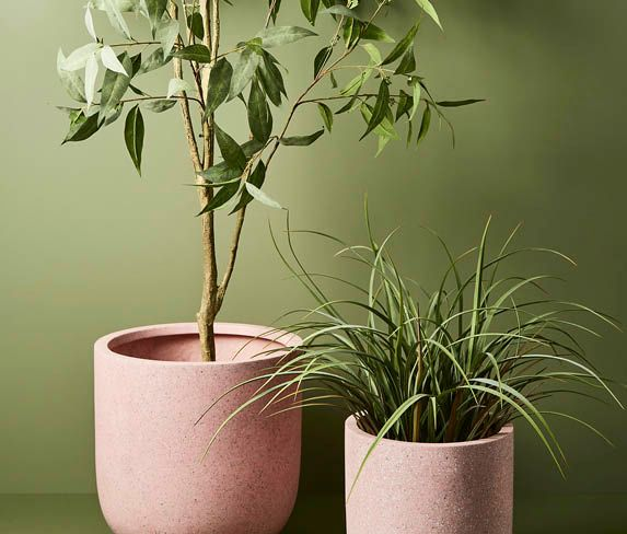 Floral Interiors Creative Living_Trees_Plants and Pots