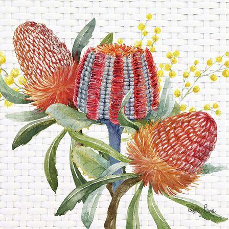 Canvas 20x20 Blossom BANKSIA TRIO