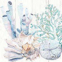 Canvas 20x20 Starfish