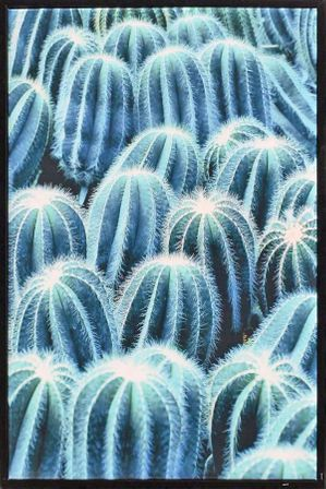 Shadow Framed Painting 60x90 PRICKLY CAC