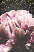 Shadow Ptg 60x90 Midnight Floral BLOSSOM