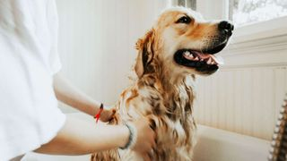 2 in 1 Shampoo & Conditioner for all pets