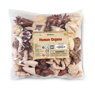 Safari Ltd Human Organs Bulk Bag