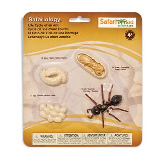 Safari Ltd Life Cycle Of An Ant Safariology