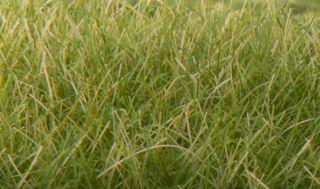 12MM STATIC GRASS MEDIUM GREEN