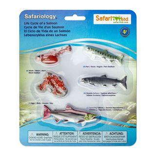 Safari Ltd Life Cycle Of A Salmon