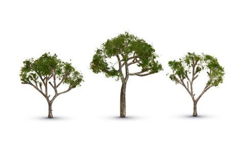 Woodland Scenics 2 1/2 - 3 1/2 Gum Tree (3)