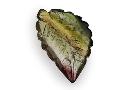 Tourmaline 29x18mm Leaf Carved (N)