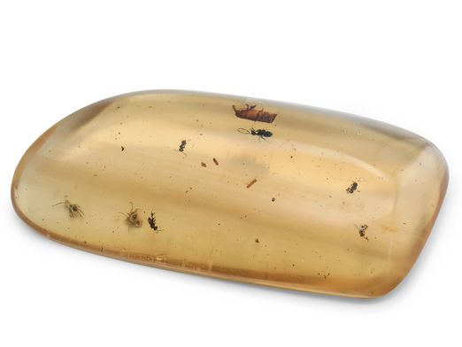 Colombian Copal Amber 100x50x80x50mm with Insects (N)