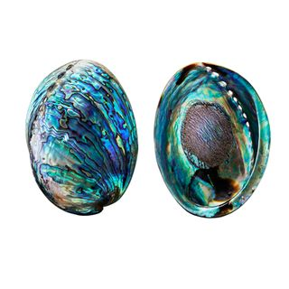 POLISHED PAUA
