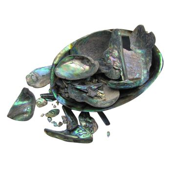 SHELL PIECES PAUA SATIN - UNSORTED 1KG