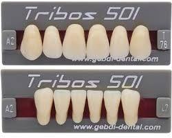 GEBDI TRIBOS 501 TEETH