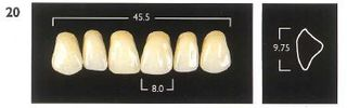 20-D3 UPPER ANTERIOR MONARCH TEETH
