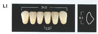 L1-A1 LOWER ANTERIOR MONARCH TEETH